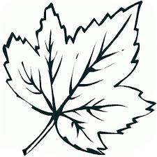Printable Leaves Coloring Pages 20 Template 19 Maple