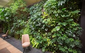 echte pflanzen statt tapete ein dschungel fürs wohnzimmer
