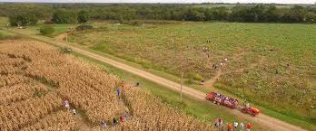 North Lawrence Pumpkin Patch by Topeka And Northeastern Kansas Pumpkin Patches Corn Mazes