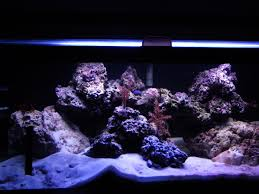 Aquascaping Tips - General Discussion - Nano-Reef.com Community Is This Aquascape Ok Aquarium Advice Forum Community Reefcleaners Rock Aquascaping Contest Live Rocks In Your Saltwater Post Your Modern Aquascape Reef Central Online There A Science To Live Rock Sanctuary 90 Gallon Build Update 9 Youtube Page 3 The Tank Show Skills 16 How Care What Makes Great Large Custom Living Coral Aquariums Nyc