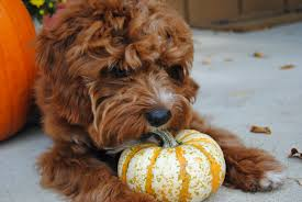 Water Soluble Pumpkin Seed Extract Uk by Pumpkin For Dogs Can And Should My Pet Eat Pumpkin
