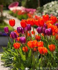 bulbs to plant now for drama traditional home landscape