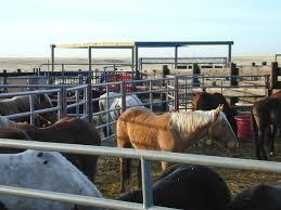 bureau de change madeleine petition free government held horses to madeleine pickens