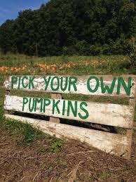 Kent Ohio Pumpkin Patches by The 25 Best Pumpkin Farm Ideas On Pinterest Pumpkin Festival