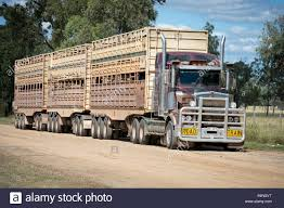 100 Cattle Truck Road Train Cattle Truck In Outback Queensland Australia Stock Photo