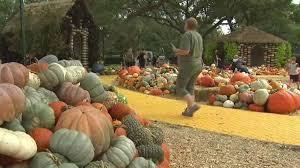 Best Pumpkin Patch Fort Worth Tx by Dallas Arboretum Autumn Festival Has A Fairy Tale Feel Nbc 5
