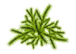 Green Fluffy Christmas Pine Tree In Snow Clip Art Vector Images Illustrations