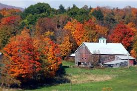 It'll Make You See Red -- Or Not: Warming Could Dull Fall Tree ... Xlentcrap Barns Flowers Stuff 2009 In Vermont The Fall Stock Photo Royalty Free Image A New England Barn Fall Foliage Sigh Farms And Fecyrmbarnactorewmailpouchfallfoliagetrees Is A Perfect Time For Drive To See National Barn Five Converted Rent This Itll Make You See Red Or Not Warming Could Dull Tree Dairy Cows Grazing Pasture With Dairy Barns Michigan Churches Mills Covered Mike Of Nipmoose Engagement Beauty Pa Leela Fish Rustic Winter Scene Themes Summer Houses Decorations