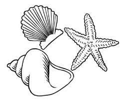 flying gull · sea shells