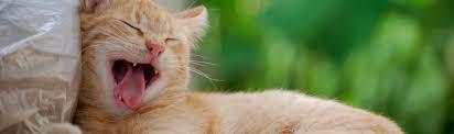 cat dental care cat dental care moncton animal hospital
