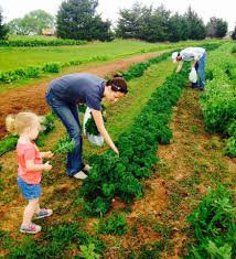 Owasso Christmas Tree Farm by 10 Places In Oklahoma To Pick Your Own Food