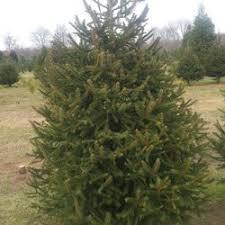 Plantable Christmas Trees Nj by Anne Ellen Christmas Tree Farm 18 Photos U0026 16 Reviews
