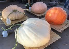 Spring Hope Pumpkin Festival Schedule by Arizona Giant Pumpkin Growers