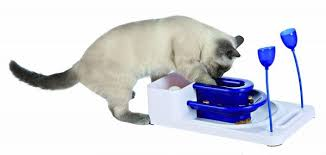 Wet Food Puzzles for Cats The Conscious Cat