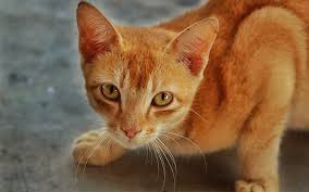 orange cat names boy cat names 250 great cat names from the happy cat site