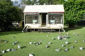 100 Pigeon Coop Plans Lofts Tyberry Lofts Racing S Australia