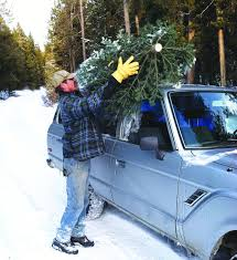 Christmas Tree Baler Netting by Christmas Tree Permits Available News Tetonvalleynews Net