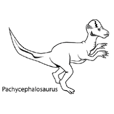 Dinosaur Face Picture Pachycephalosaurus Coloring Pages
