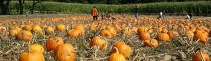 Chesterfield Pumpkin Patch 2015 by Pumpkin Picking In Nj 2015 County Guide