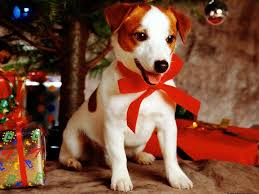 Christmas Tree Preservative Aspirin by Tips To Keep Your Pets Safe For The Holidays Frankie Flowers