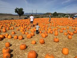 Pumpkin Patch Animal Farm In Moorpark California by Pumpkin Patch The Mitchell Adventures