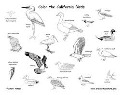 Extraordinary Ideas Avocet Animal Coloring Pages California