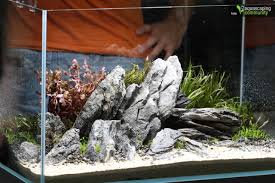 Fuck Yeah Aquascaping - A Very Tasteful Rocky Setup By Jurijs ... How To Set Up An African Cichlid Tank Step By Guide Youtube Aquascaping The Art Of The Planted Aquarium 2013 Nano Pt1 Best 25 Ideas On Pinterest Httpwwwrebellcomimagesaquascaping 430 Best Freshwater Aqua Scape Images Aquascape Equipment Setup Ideas Cool Up 17 About Fish Process 4ft Cave Ridgeline Aquascape A Planted Tank Hidden Forest New Directly After Setting When Dreams Come True