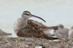 Ask A Birder How Do Birds Survive Hurricanes