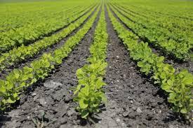 offre d emploi bureau veritas audits supply chain dans l agroalimentaire bureau veritas acquiert
