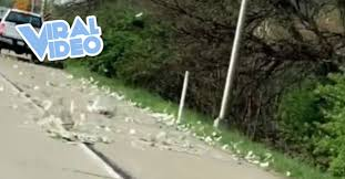 Viral Video: Bank Truck Drops Money All Over The Road
