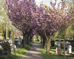 The Various Problems That Weeping Cherry Trees Face