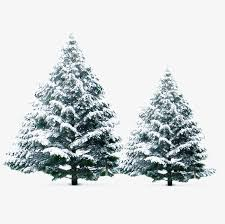 Snow In The Pines Winter Christmas Tree PNG Image And Clipart