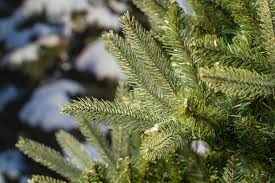 Lifelike Artificial Christmas Trees Canada by 6 5ft Washington Valley Spruce Slim Life Like Artificial Christmas