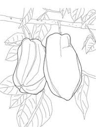 Star Fruit On Tree Coloring Page From Category Select 26690 Printable Crafts
