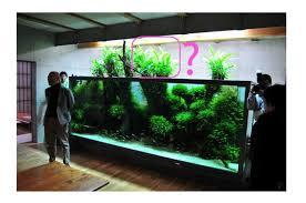 aquarium dans le mur mur végétal avec aquarium de 320l paludarium page 3