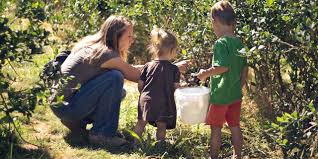 Pumpkin Patches Near Chico California by Amazing Agritourism Experiences Visit California