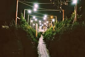 Bethlehem Lights Christmas Trees With Instant Power by Christmas Tree Shops New York Christmas Lights Decoration