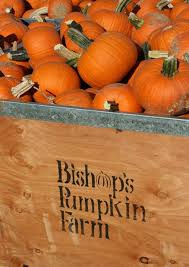 Wheatland California Pumpkin Patch by Bishop U0027s Pumpkin Farm The King Of Pumpkin Patches In The