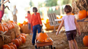 Kent Ohio Pumpkin Patches by List Pumpkin Patches Hayrides And Corn Mazes In West Michigan