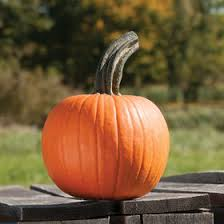 Types Of Pumpkins For Baking by Pie Pumpkin Seeds Organic Varieties Johnny U0027s Selected Seeds