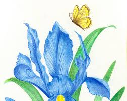 Parrot Tulip Nature Colored Pencil Drawing Reion Fine Photos Color Sketches Of Drawings Art Gallery