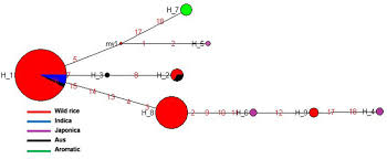 Plink Your Sink Balls by Frontiers Evolutionary Insights Based On Snp Haplotypes Of Red