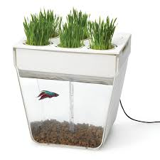 Aquafarm Aquaponics Fish Garden Review Aquaponics Is Fun