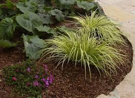 Gardening Basics How to Apply Mulch ⋆ North Coast Gardening