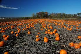 Pumpkin Patch Colorado Springs by Market Farmers U2013 Farmers Market Federation Of Ny