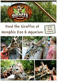 Feed The Giraffes At Memphis Zoo. For $5 Your Family Of Four Can ... How I Spent My Summer Vacation Truck Stop Love The Truckers Bible Pilot Flying J Travel Centers Thousands Flock To Loves For A Chance At Powerball Jackpot Try Thai Street Food At Soi Number 9s Memphis Feed The Giraffes Zoo For 5 Your Family Of Four Can Save Dates Events In August Choose901 Updates Manx Sea Safari Wanderful Guide Home Blues Soul And Rock N Roll Iowa 80 Truckstop Twentyfour Hours Pacific Standard Six Us States Increase Diesel Fuel Taxes