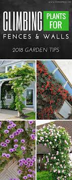 100 Www.home And Garden Top 10 Beautiful Climbing Plants For Fences And Walls