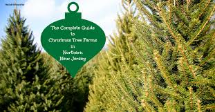 Fresh Christmas Trees Types by The Complete Guide To Christmas Tree Farms In North Jersey
