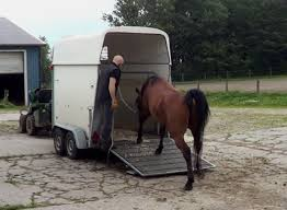 comment faire monter un cheval dans le european