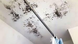 schimmel im schlafzimmer schimmelpilz lüftung nicht ausreichend